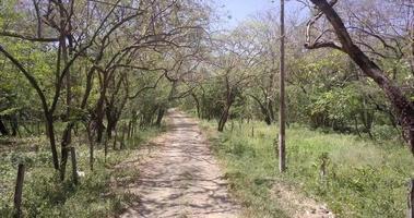 pov vue sur une route de campagne et des arbres. video