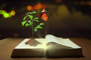 Young plant of knowledge with soil planting and butterfly photo