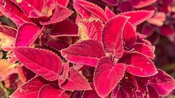 Beautiful bright flower background branch nature photo