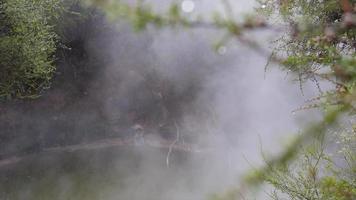 primer plano de las ramas de los árboles y agujas de pino en la niebla sobre un río. video
