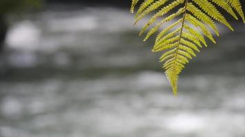 primer plano de las ramas de los árboles y hojas de helecho en la niebla sobre un río. video