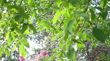 gros plan de fleurs et de feuilles d'arbres et de branches dans un jardin. video
