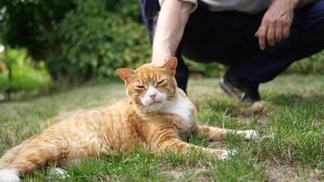 um homem acaricia um gato. video