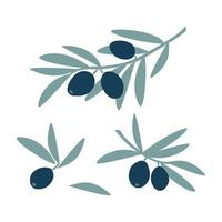 Set of olive tree branches with green leaf and fruit olives in hand drawing style isolated on white background. Vector flat illustration. Design for textiles, labels, posters, card