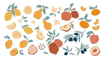 Set of fresh fruit lemon, peach, apple, mandarin, apricot, pomegranate, olive in hand drawing style isolated on white background. Vector flat illustration. Design for textiles, labels, posters, card