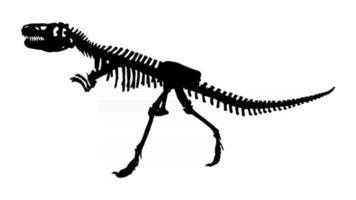 esqueleto de siamotyrannus isanensis. Familia de tyrannosauridae sobre fondo aislado vector