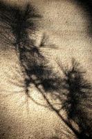 sombra oscura de un árbol en un muro de hormigón foto