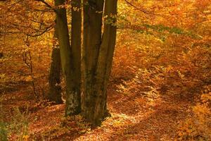 Forest at autumn, in orange and yellow colors. photo
