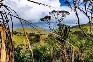 Views from a hill at Manakua Heads, Auckland, New Zealand photo