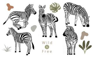 animal object collection with zebra.Vector illustration for icon vector