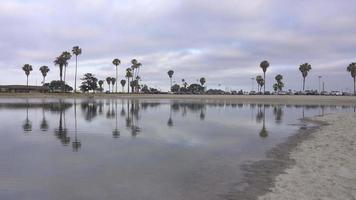 un hombre que hace jogging en la bahía y la playa. video