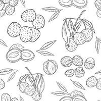 Lychee seamless pattern sketch hand drawing vector