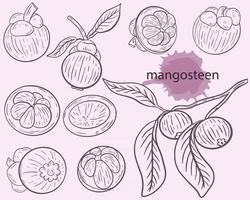 Mangosteen sketch set vector