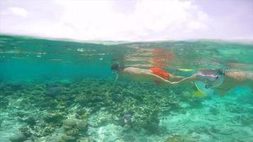 A man and woman couple snorkeling over a coral reef of a tropical island. video
