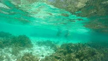 A man and woman couple snorkeling with a seascooter over a coral reef of a tropical island. video