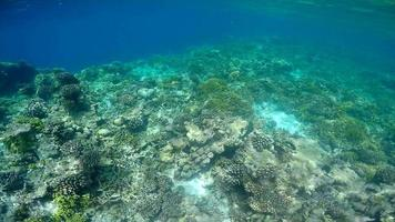 POV underwater view of a scenic coral reef and fish. video