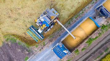 Aerial top view of Harvester machine and truck working in rice field, View from above photo