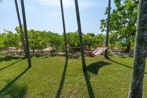 Tropical beach with hammock under the palm trees in sunlight photo