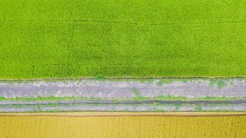 Vista aérea superior del campo de arroz verde y amarillo desde arriba foto