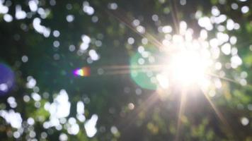 Sunlight shines through the trees, blurry scene. video