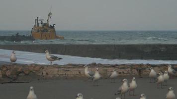 altes Boot in der Nähe des Piers video