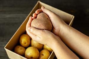 manos femeninas sosteniendo una patata vegetal fea en forma de corazón sobre una caja llena de patatas. comida cuadrada y fea. foto