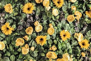 Background of spring artificial yellow chrysanthemums and peony roses in the garden. photo