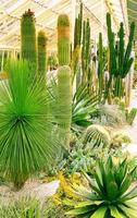plantas verdes del desierto foto
