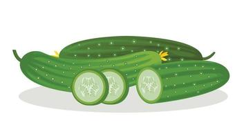 Vector image of cucumbers and slices, isolated on a white background. Fresh vegetables.