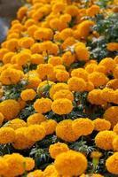 hermosas flores amarillas y naranjas foto