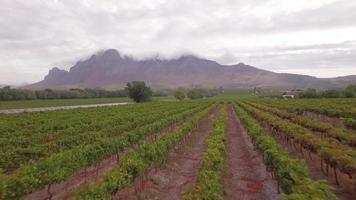 Aerial travel drone view of solar panels and grape vineyard farms in South Africa. video