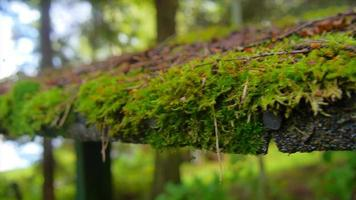 Close up of moss growing in a forest of trees. video