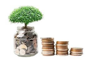 Tree on save money coins in hand, Business finance investment concept. photo