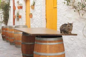 spanish bar outside in siesta time cat is sitting on barrel table photo
