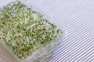 Micro greens growing at home, super food healthy diet photo