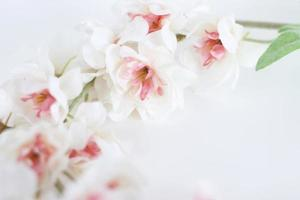 Flowers composition. Frame made of white tender flowers on white background. Flat lay, copy space photo