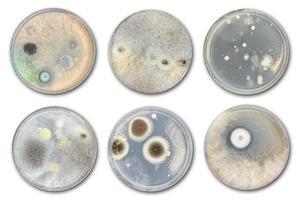 bacterias en placa de agar aislado del aire foto