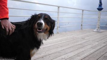 un perro es acariciado en una terraza en la cima de una montaña. video