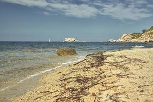 The algae on the shore of the sea. photo