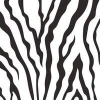 patrón de estampado de piel de animal, detalle y textura de piel de cebra vector