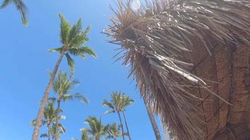 Palm trees and palm frond shade umbrellas provide shade in Maui, Hawaii. video