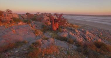 Vista aérea de drones de safari de árboles baobab en las llanuras de África. video