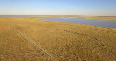 Vista aérea de un dron de una manada de animales salvajes ñus en un safari en las llanuras de África. video