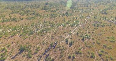 Aerial drone view of a herd of elephants wild animals in a safari in Africa plains. video