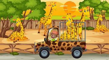 Safari en la escena del atardecer con niños viendo grupo de jirafas. vector