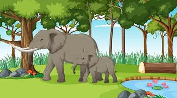 Elephant in forest or rainforest scene with many trees vector