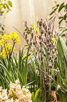 Ramo en un jarrón de ramas de sauce con brotes en un floreciente jardín de primavera foto