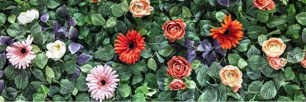Background of spring artificial red chrysanthemums and peony roses in the garden. Spring. Blooming wall.Banner photo