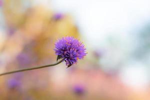 flores púrpuras en el cielo. foto