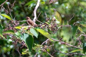sparrow on green tree photo